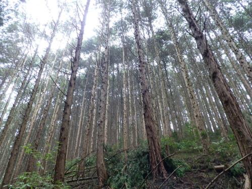 栃木・佐野・足利・植林から間伐まで、自然素材の家づくり